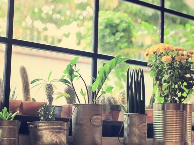 室內植栽淨化空氣讓房子會呼吸